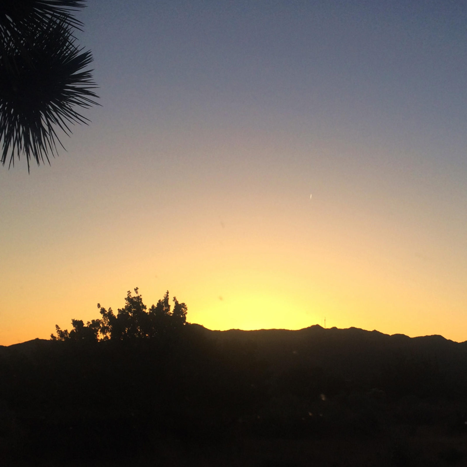 joshua-tree-travel-diary-vegan-edition